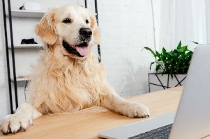 hond achter laptop voor communicatie