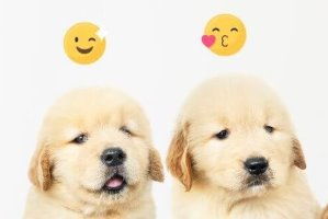 puppies met emojis