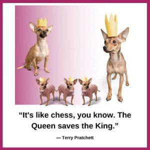 5 honden met een kroontje op Koningsdag 2020